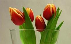 Ostbelgien - Blumen & Dekoration