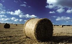 Ostbelgien - Land- u. Forstwirtschaft