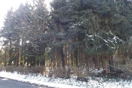Baugrundstück in  Industrie- und Mischzone (Wohngebiet) in Top Lage an der Deutsch-Belgischen Grenze - 4730 Raeren, Belgien