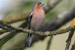 Ostbelgien - Vögel an Bach und Waldrand