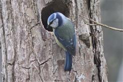 Ostbelgien - Die Vogelwelt des Frühjahres - Ornithologische Exkursion