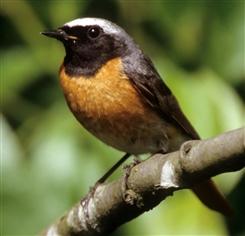 Ostbelgien - Durch die Neundorfer Naturschutzgebiete - Ornithologische Exkursion