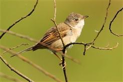 Ostbelgien - Frühlingserwachen - Ornithologische Exkursion