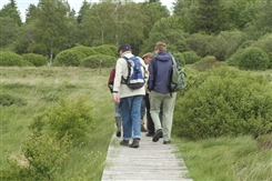 Ostbelgien - Das Brackvenn im Herbst - naturkundliche Exkursion