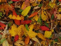 Ostbelgien - Die Farben der Natur