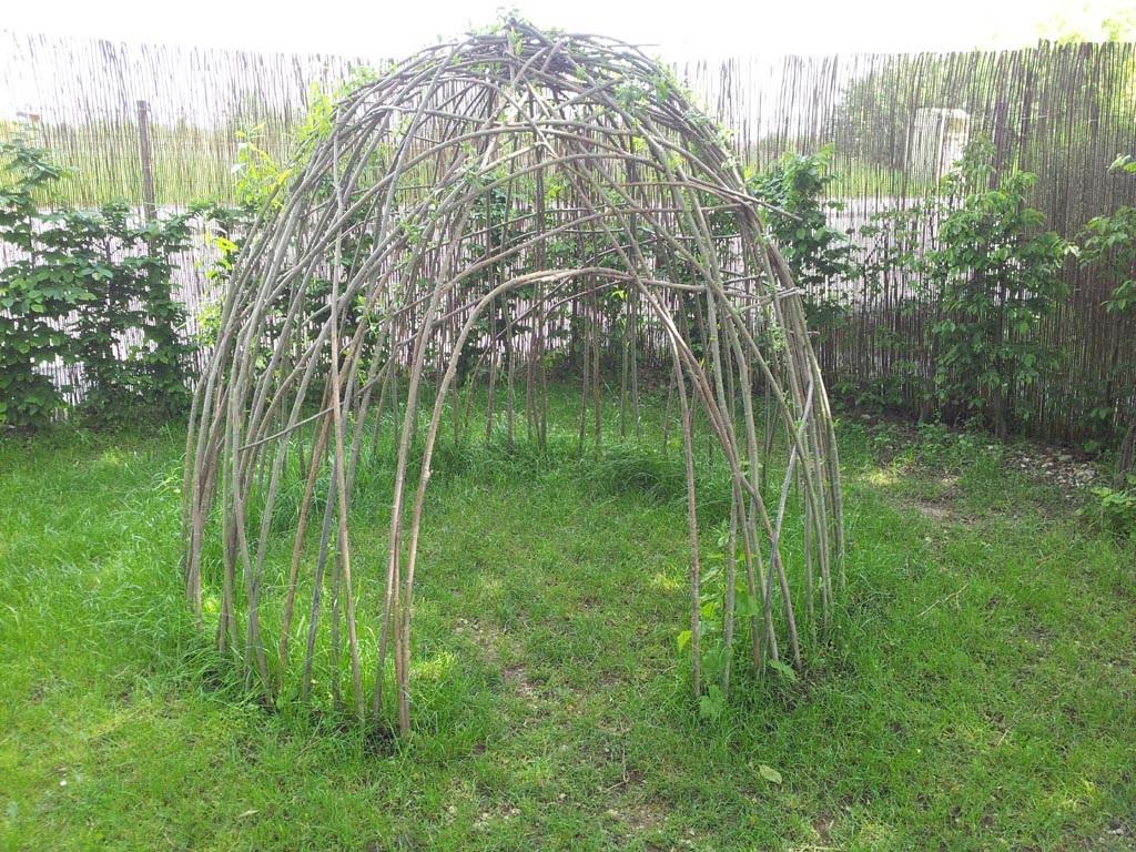 Weiden Ernten Pflanzen Und Flechten Ostbelgien Net